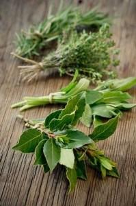 laurel herb