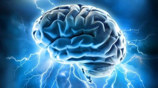 gotu kola in helping brain circulation